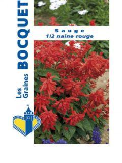Sauge éclatante - Salvia splendens