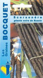 Scorsonère Géante Noire De Russie - Scorzonera hispanica