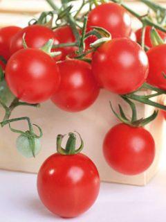 Tomate Pepe F1 - Solanum lycopersicum