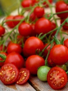 Tomate Supersweet 100 F1 - Solanum lycopersicum