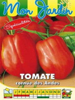 Tomate Cornue des Andes - Tomate poivron
