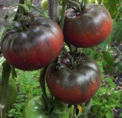 Tomate Noire De Russie AB - Ferme de Ste Marthe