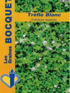 Trèfle blanc - Ferme de Sainte Marthe