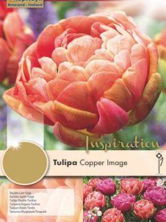 Tulipe double hâtive Copper Image