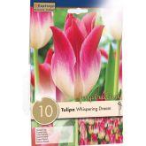 Tulipe Triomphe Whispering Dream