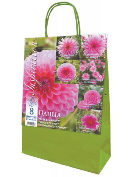 Dahlia en mélange 'Rose charmant'