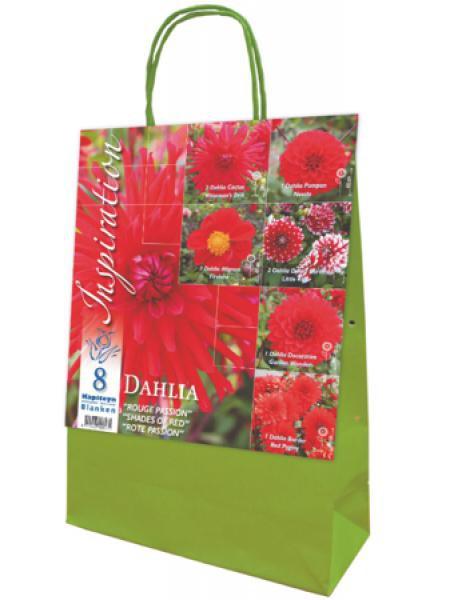 Dahlia en mélange 'Rouge Passion'
