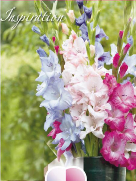 Glaieul Melange Bleu Rose Et Violet Gladiolus Le Jardin Du Pic