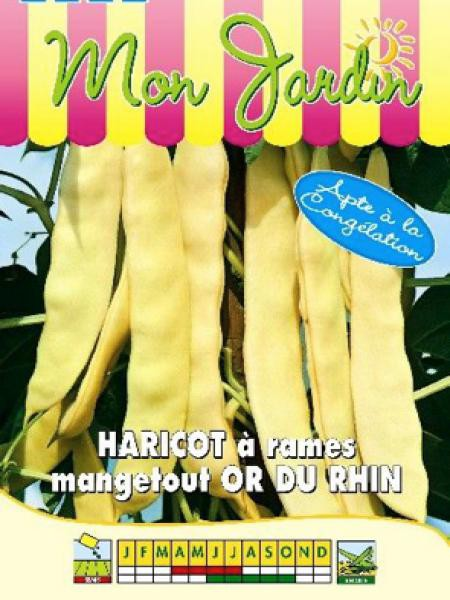Haricot à rames beurre 'Or du Rhin'