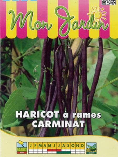 Haricot à rames mangetout 'Carminat'