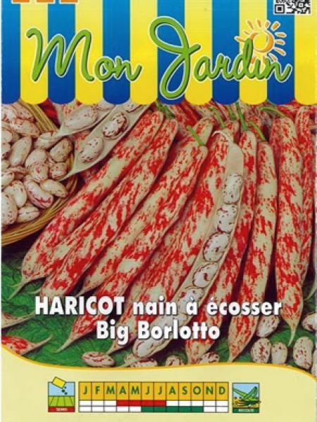 Haricot nain à écosser 'Big Borlotto'