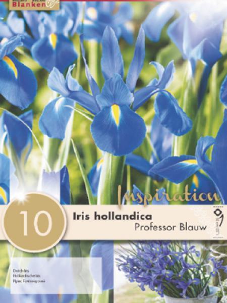 Iris de Hollande 'Professor Blauw'