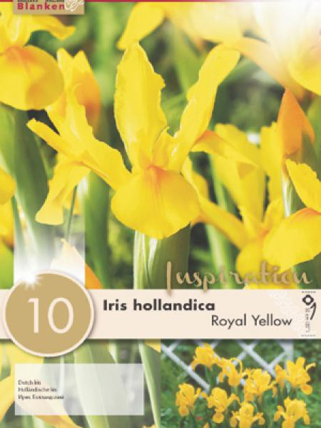 Iris de Hollande 'Royal Yellow'