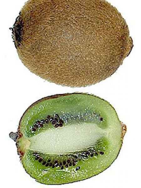 Kiwi autofertile, actinidier 'Jenny'
