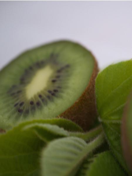 kiwi 39 bruno 39 actinidia chinensis le jardin du pic vert. Black Bedroom Furniture Sets. Home Design Ideas
