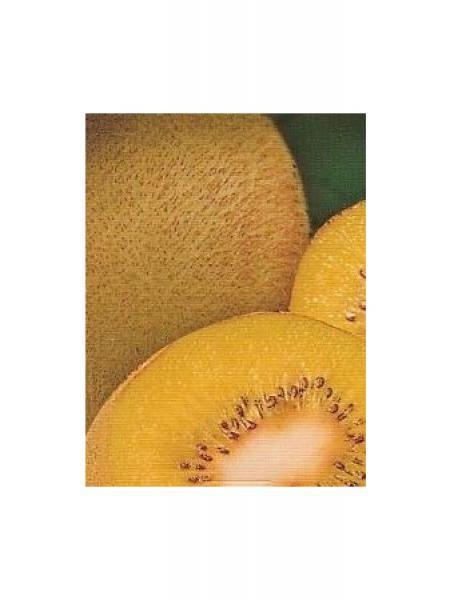 Kiwi 'Golden Delight' -mâle