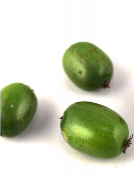 Kiwi, Kiwai 'Vitikiwi'