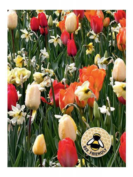Mélange Abeilles et papillons - Blanc, orange et rouge