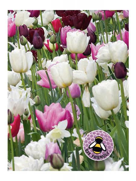 Mélange Abeilles et papillons - Blanc, rose et pourpre