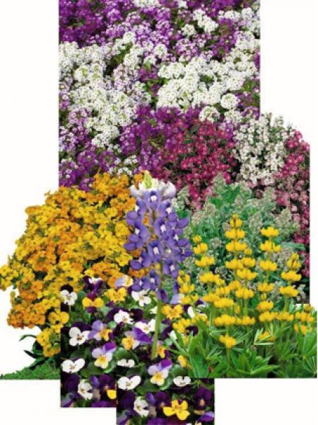 Mélange 'Fleurs parfumées'