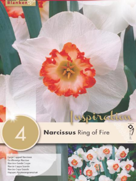 Narcisse à couronne 'Ring of Fire'