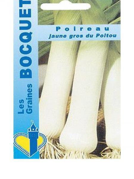 Poireau 'Jaune gros du Poitou'