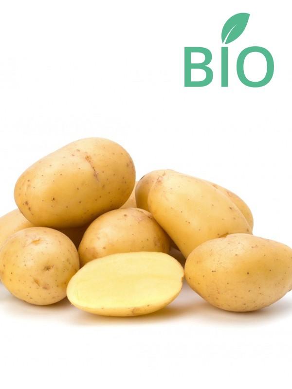 Pomme de terre Bio 'Blanche'