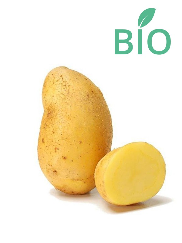 Pomme de terre Bio 'Nicola'