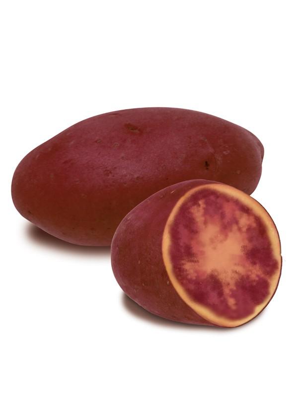 Pomme de terre  'Rouge des Flandres'