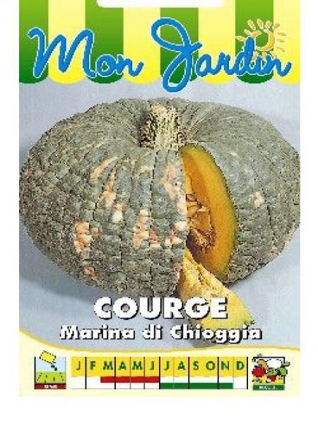 Potiron 'Marina di Chioggia'