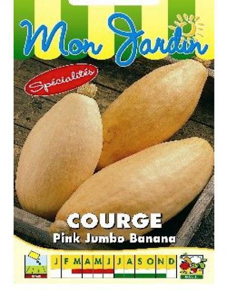 Potiron 'Pink Jumbo Banana'