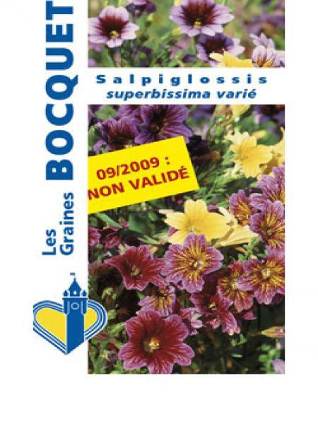 Salpiglossis à grandes fleurs