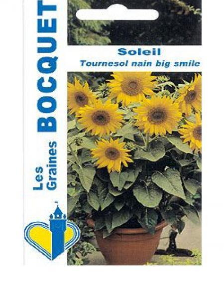 Soleil nain 'Big Smile'