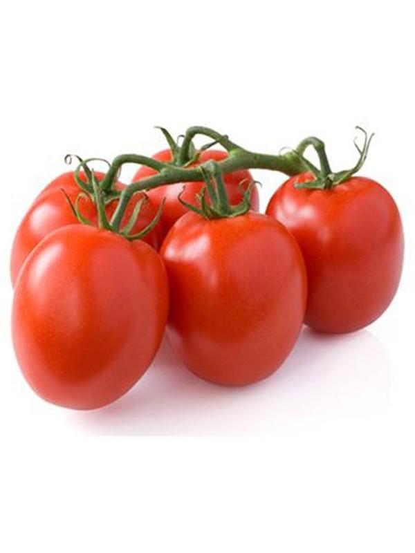 tomate 39 cencara 39 solanum lycopersicum 39 cencara 39 le jardin du pic vert. Black Bedroom Furniture Sets. Home Design Ideas