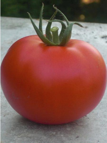 Tomate HYB F1 'Montfavet'