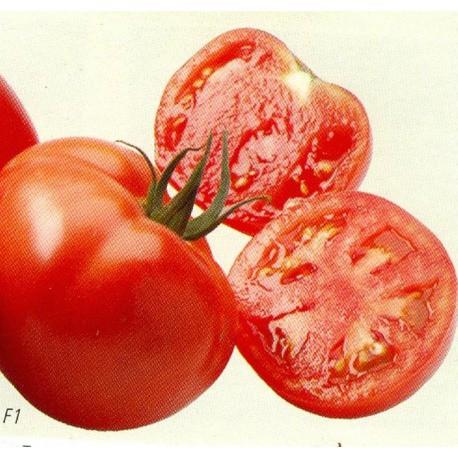 Tomate 'MAESTRIA'