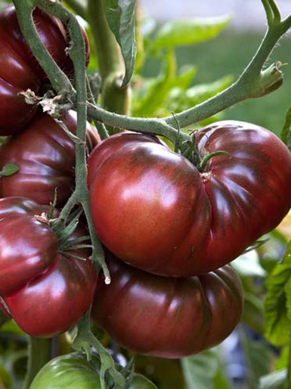 Tomate 'Noire de Crimée'