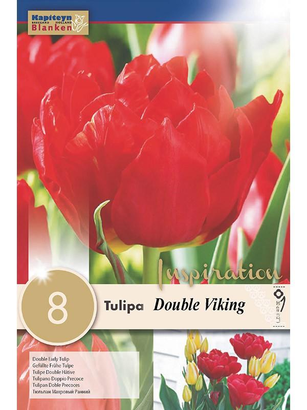 Tulipe double 'Viking'