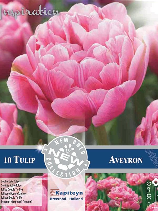 Tulipe double 'Aveyron'