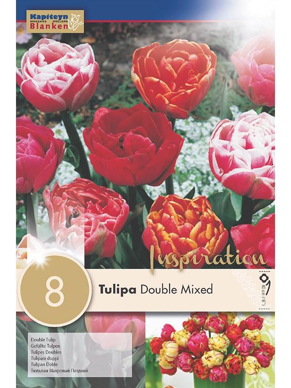 Tulipe double 'Mixed Colours'