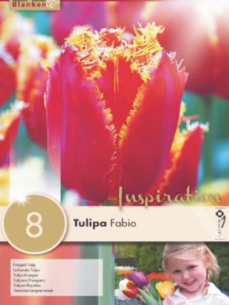 Tulipe 'Fabio'