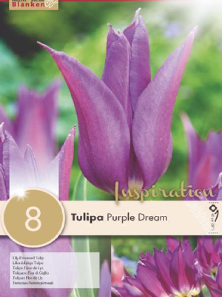 Tulipe fleur de lis 'Purple Dream'