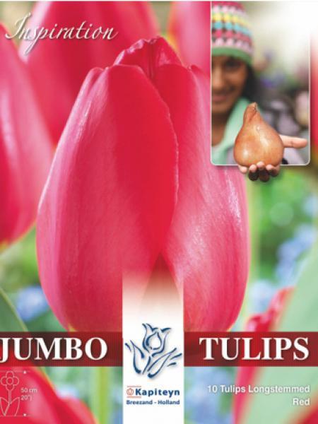 Tulipe 'Jumbo - Red Impression'