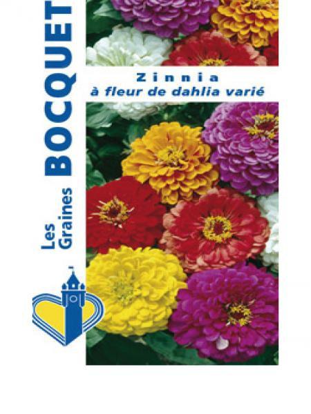 Zinnia à fleurs de dahlia varié